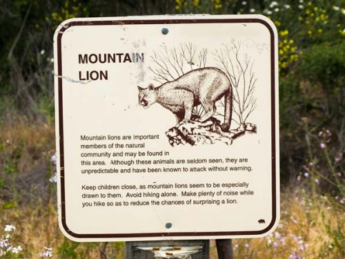 scary mountain lion sign