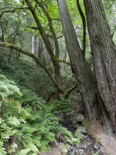smeaton chase grove