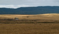 Little Shack on the Palouse in buildings photo gallery