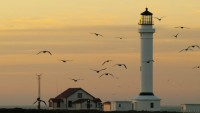 The Birds in lighthouse photo gallery