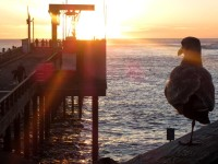Watching the Sunset in seascape photo gallery