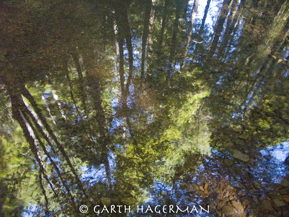 Reflected Forest on Garth Hagerman Photo/Graphics