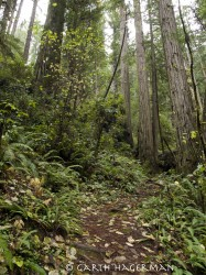 Ascent from Brown Creek in Redwood National and State Parks photo gallery