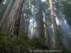 Blue Sky Fog in Redwood National and State Parks photo gallery