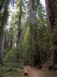 Bull Creek Flat in Humboldt Redwoods photo gallery