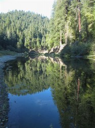 Eel Reflections in Humboldt Redwoods photo gallery