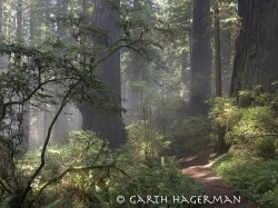 Enchanted Trail in Redwood National and State Parks photo gallery