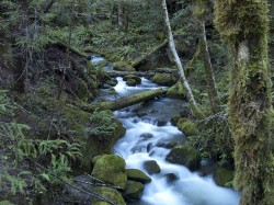 Grasshopper Peak Creek in Humboldt Redwoods photo gallery