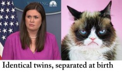 Identical Twins in politics photo gallery