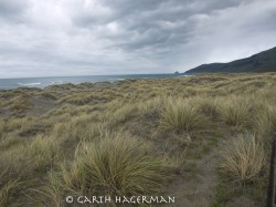 McNutt Gulch Beachgrass in seascape photo gallery