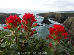Paintbrush Cliffs in rare plants photo gallery