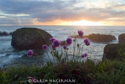 Pom Poms in sunset photo gallery