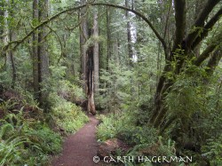Prairie Creek Trail in Redwood National and State Parks photo gallery