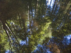 Reflected Forest in reflections photo gallery