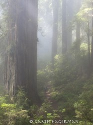 Top of Damnation in Redwood National and State Parks photo gallery