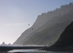 Usal Beach Ravens in seascape photo gallery