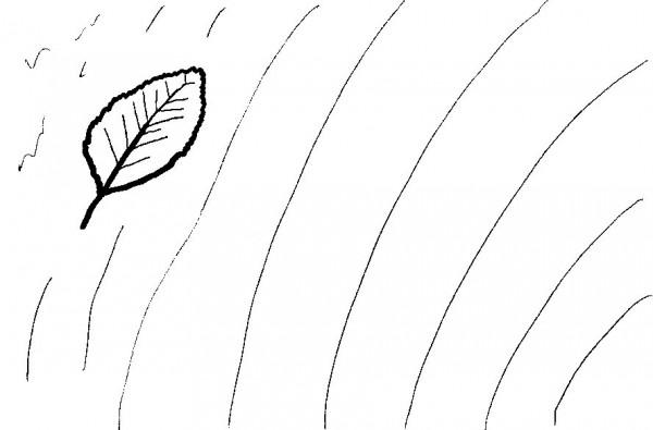 A leaf breaks a pattern of ripples