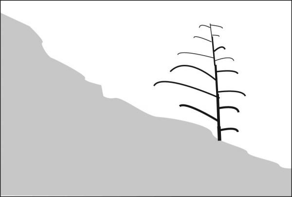 Diagonal ridge line with thirded tree
